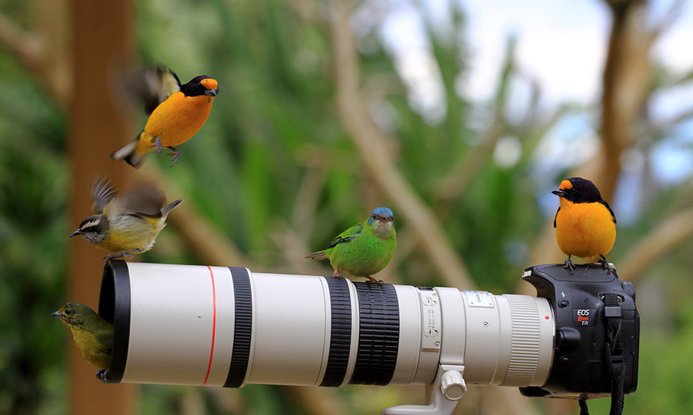 птицы 20