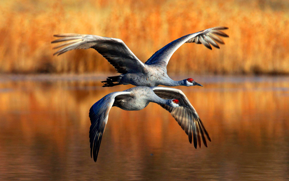 птицы 21