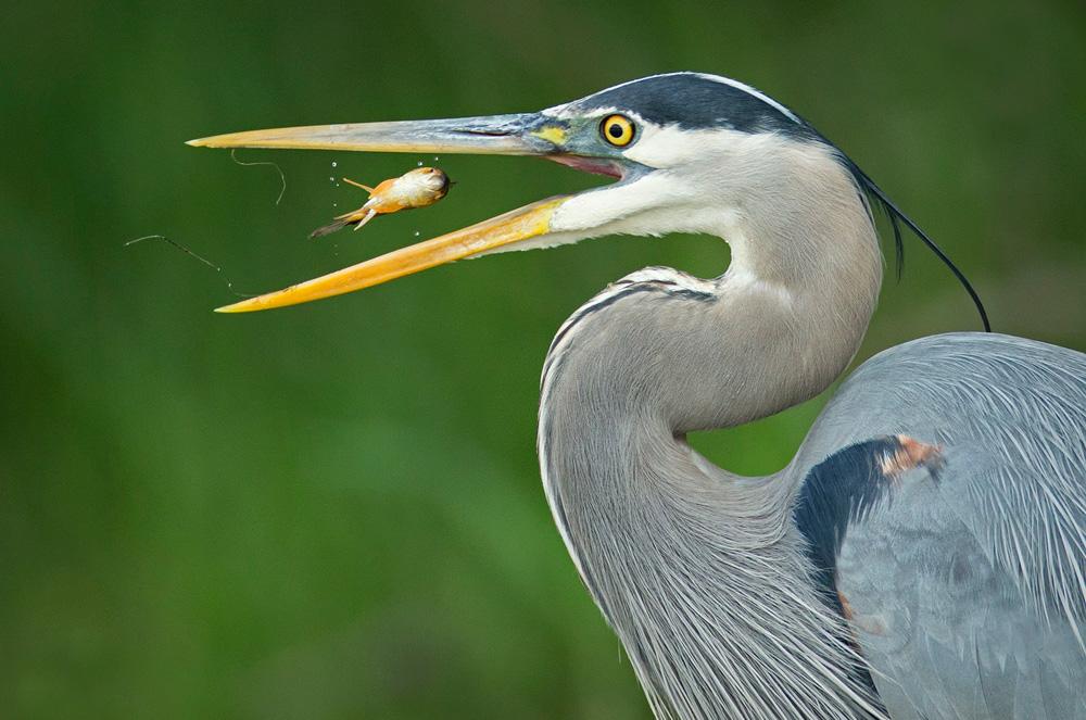 птицы 6