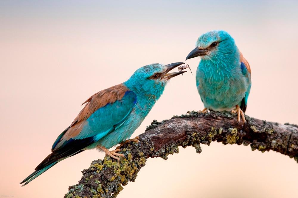 птицы 7