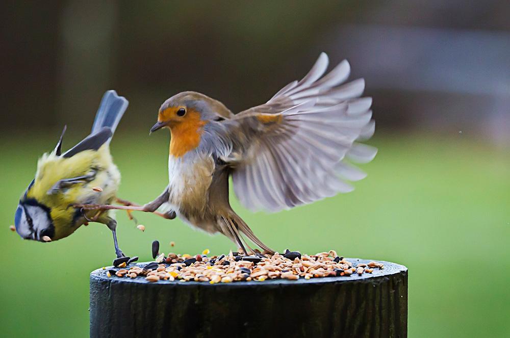 птицы 9