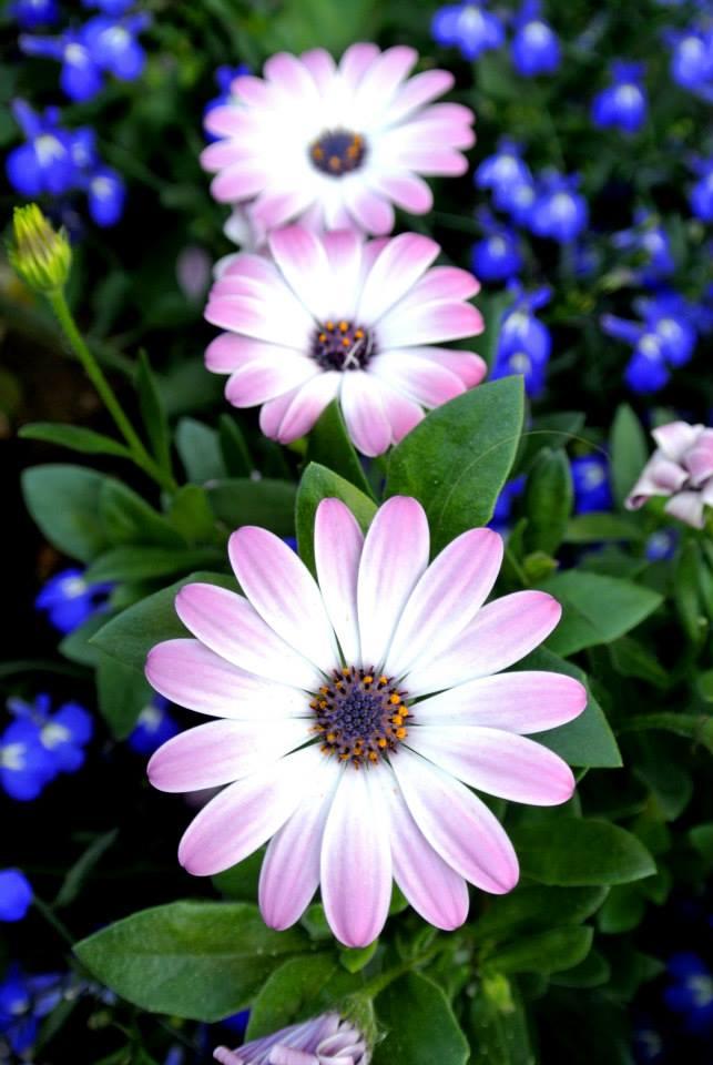 цветы в Риге, Photo by Elena Tonova 10