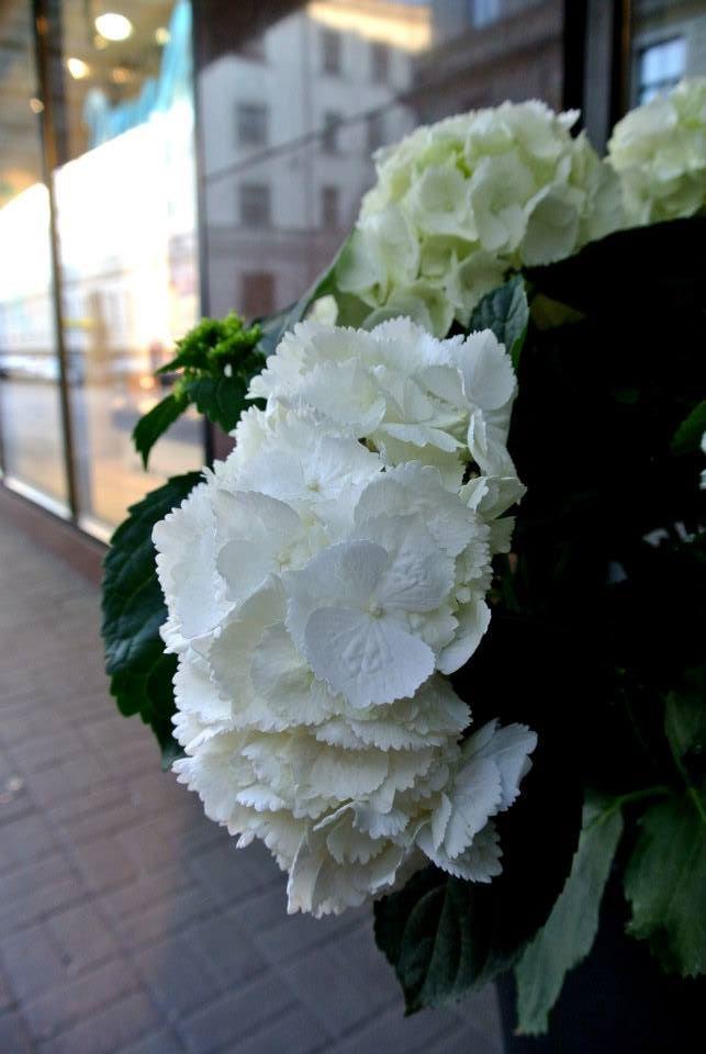 цветы в Риге, Photo by Elena Tonova 13