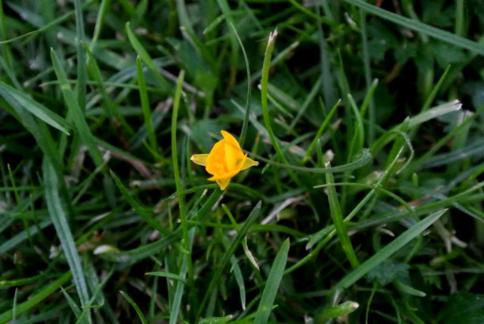 цветы в Риге, Photo by Elena Tonova 16