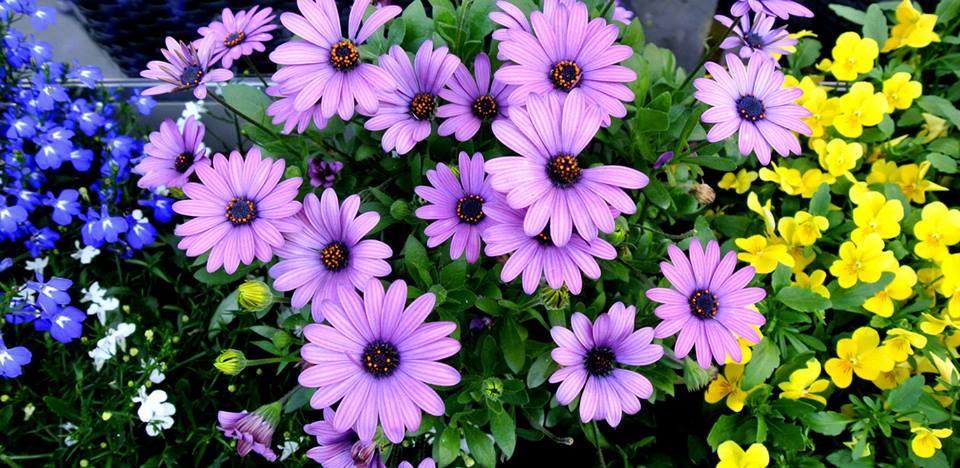 цветы в Риге, Photo by Elena Tonova 25