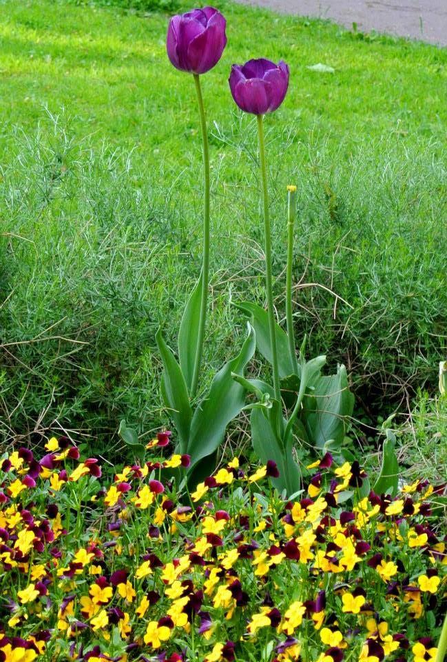 цветы в Риге, Photo by Elena Tonova 4