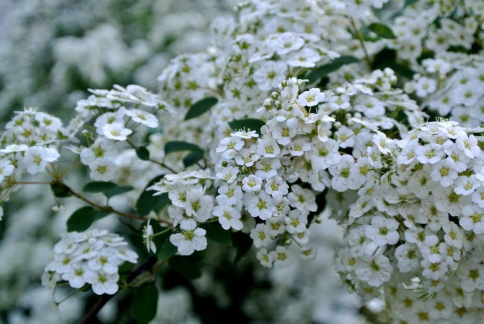 цветы в Риге, Photo by Elena Tonova 5