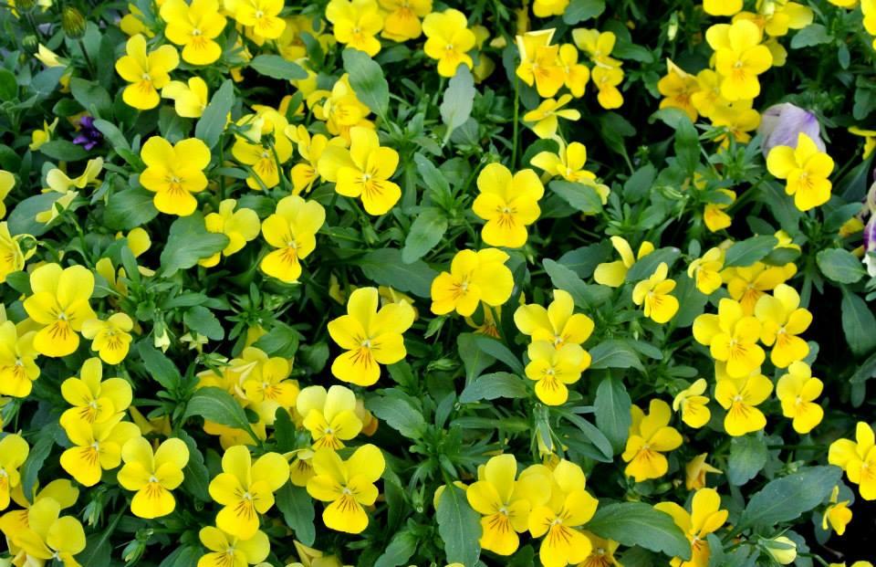 цветы в Риге, Photo by Elena Tonova 7