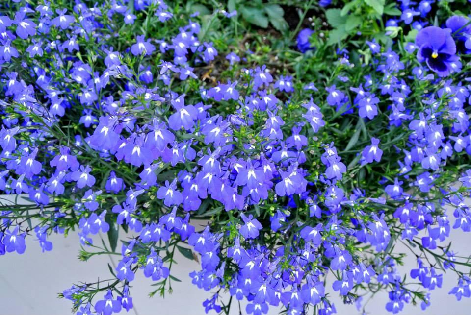 цветы в Риге, Photo by Elena Tonova 8