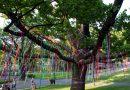 В Риге вновь «расцвело» Дерево дружбы