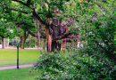 Более 1000 ленточек украсили Бстионную горку. Ленты на дереве в Риге